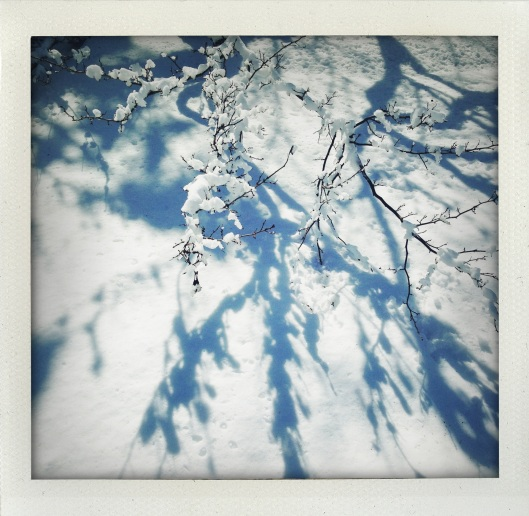 """Snow Shadows"" by Leila Knapp"